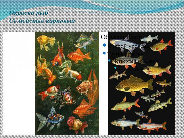 Окраска рыб Семейство карповых
