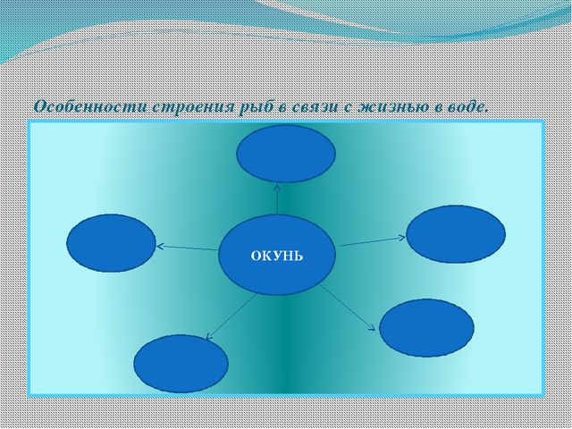 Особенности строения рыб в связи с жизнью в воде. ОКУНЬ