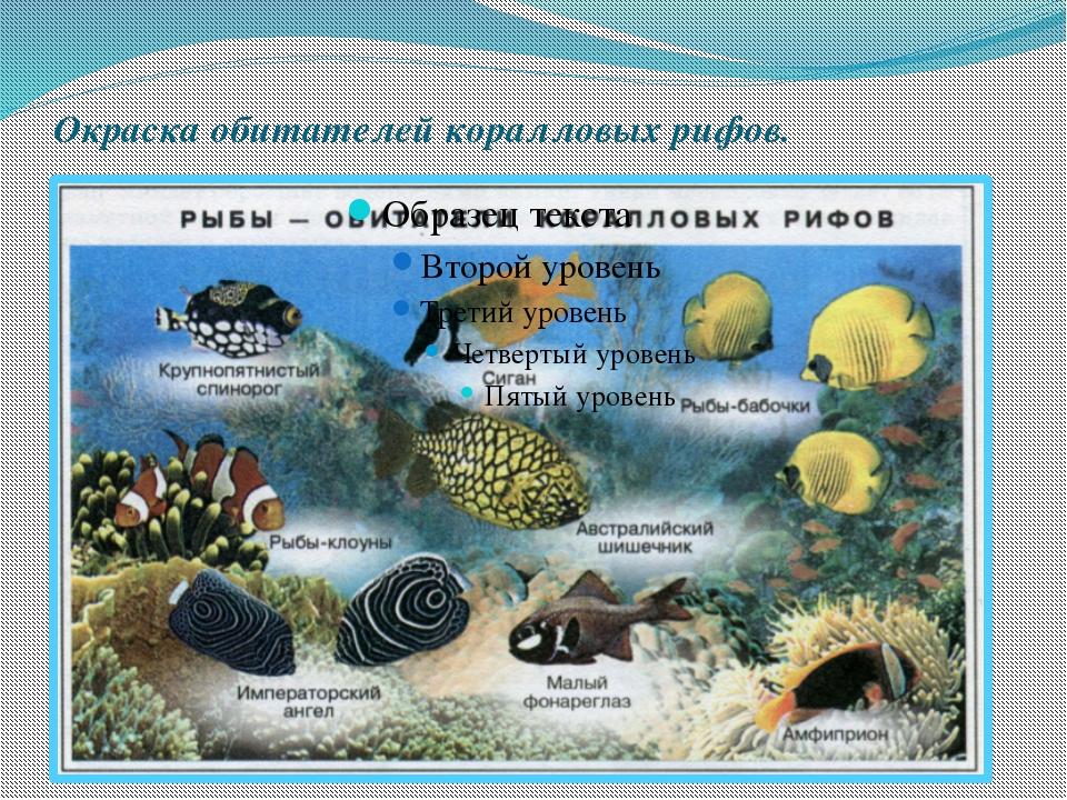 Окраска обитателей коралловых рифов.
