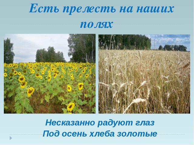 Есть прелесть на наших полях Несказанно радуют глаз Под осень хлеба золотые