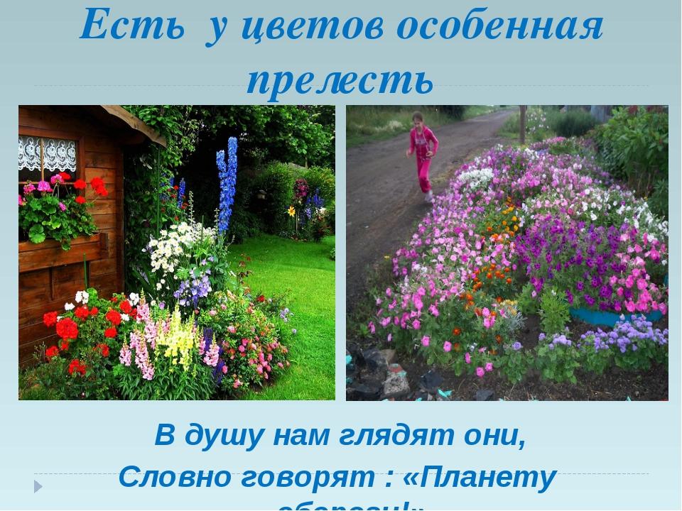 Есть у цветов особенная прелесть В душу нам глядят они, Словно говорят : «Пл...