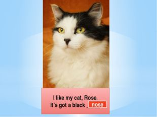 I like my cat, Rose. It's got a black _____ nose