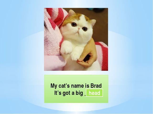 My cat's name is Brad It's got a big _____ head