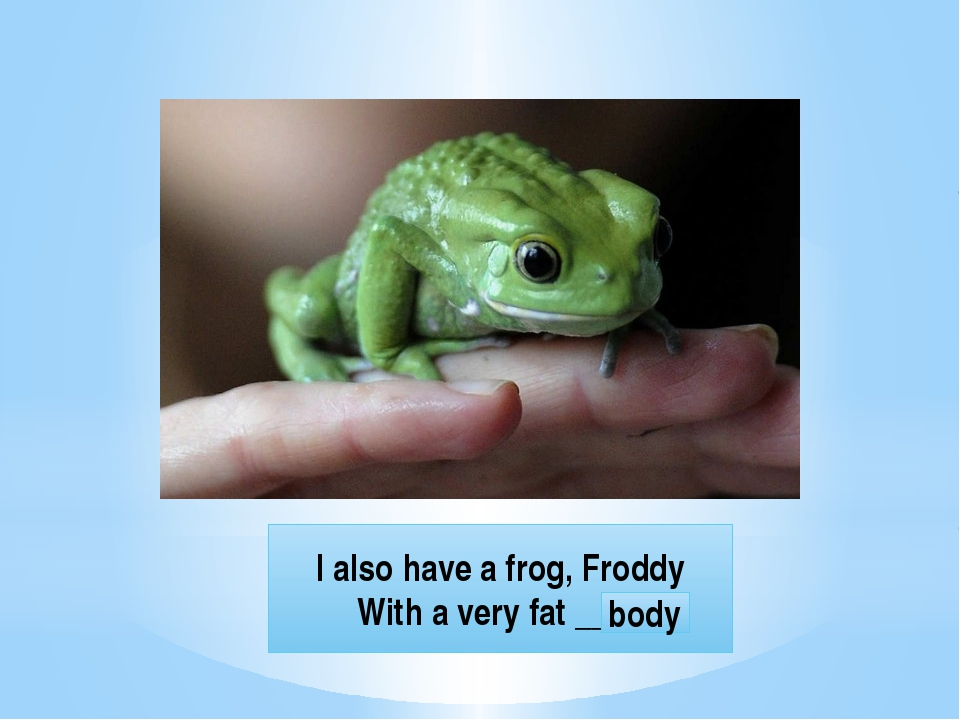 I also have a frog, Froddy With a very fat ____ body