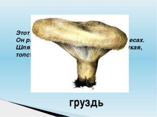 Этот гриб начинается с буквы «Г». Он растёт в хвойных и лиственных лесах. Шля