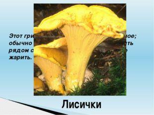 Этот гриб названием похож на животное; обычно не растёт один, а старается быт