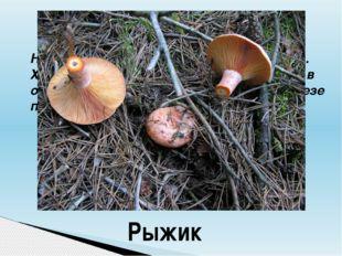 Начинается название гриба на букву «Р». Хороши эти грибы в засоле. По вкусу о