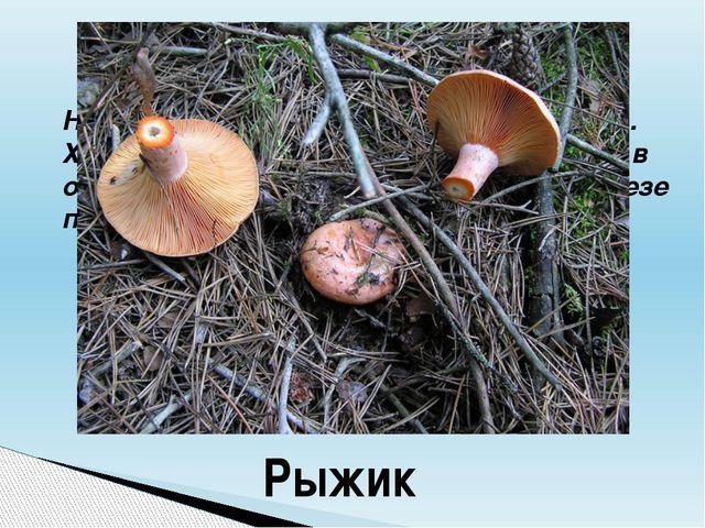 Начинается название гриба на букву «Р». Хороши эти грибы в засоле. По вкусу о...
