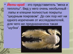 """Йети-краб - это представитель """"меха и теплоты"""". Вид у него очень необычный -"""