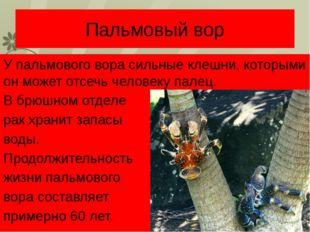 Пальмовый вор У пальмового вора сильные клешни, которыми он может отсечь чело