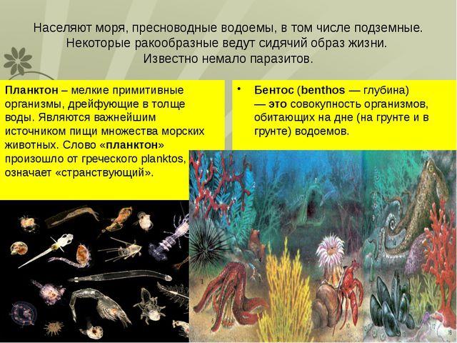 Населяют моря, пресноводные водоемы, в том числе подземные. Некоторые ракообр...
