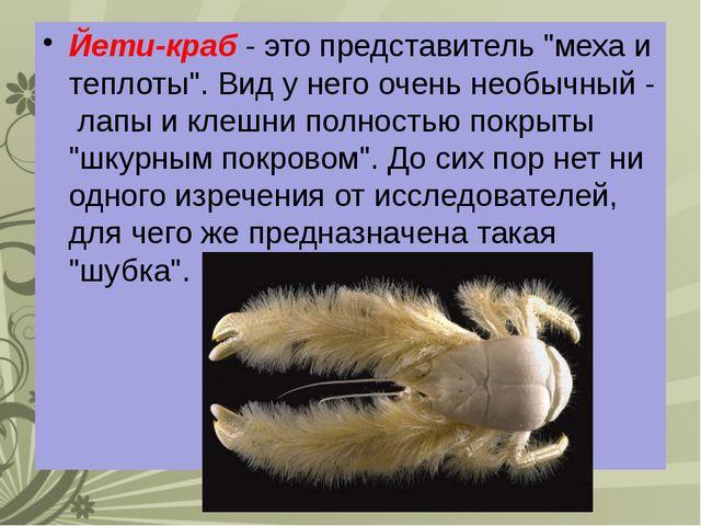 """Йети-краб - это представитель """"меха и теплоты"""". Вид у него очень необычный -..."""