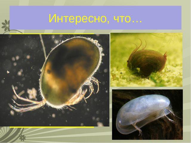 Интересно, что… Самцы ракушковых рачков имеют сперматозоиды длиной до 6 мм. Э...