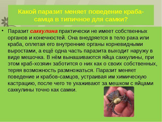 Какой паразит меняет поведение краба-самца в типичное для самки? Паразит сакк...