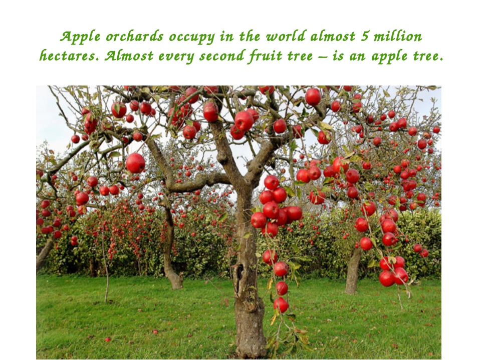 Apple orchards occupy in the world almost 5 million hectares. Almost every se...