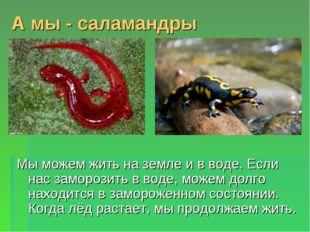 А мы - саламандры Мы можем жить на земле и в воде. Если нас заморозить в воде