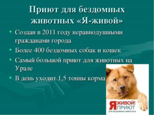 Приют для бездомных животных «Я-живой» Создан в 2011 году неравнодушными граж