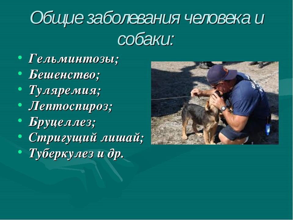 Общие заболевания человека и собаки: Гельминтозы; Бешенство; Туляремия; Лепто...