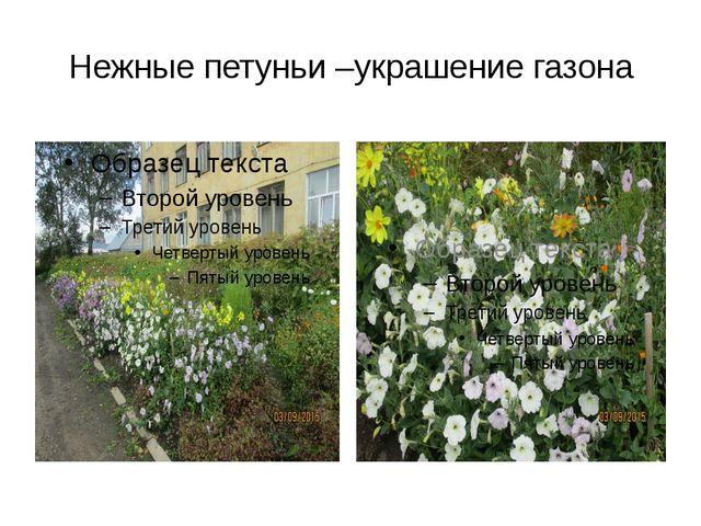 Нежные петуньи –украшение газона