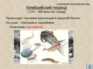 Кембрийский период ( 570 – 490 млн.лет назад) Происходит «великая революция в