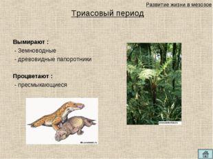 Триасовый период Вымирают : - Земноводные - древовидные папоротники Процветаю