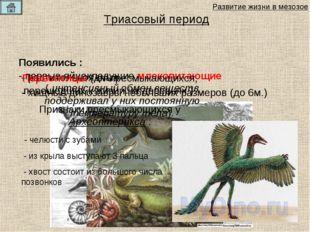Появились : - растительноядные - хищные динозавры небольших размеров (до 6м.)