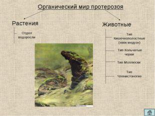 Органический мир протерозоя Отдел водоросли Тип Кишечнополостные («век медуз