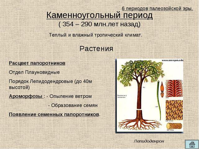 Каменноугольный период ( 354 – 290 млн.лет назад) Теплый и влажный тропически...