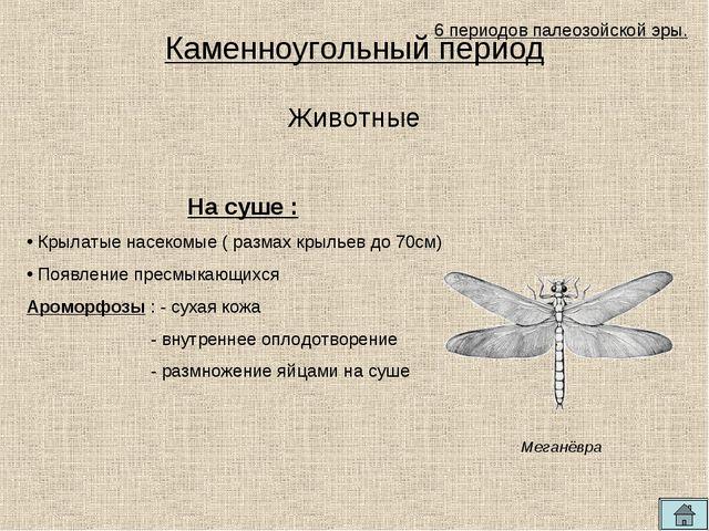 Каменноугольный период 6 периодов палеозойской эры. На суше : Крылатые насеко...
