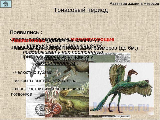 Появились : - растительноядные - хищные динозавры небольших размеров (до 6м.)...