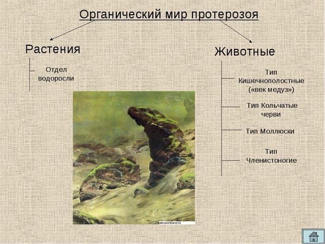 Органический мир протерозоя Отдел водоросли Тип Кишечнополостные («век медуз...