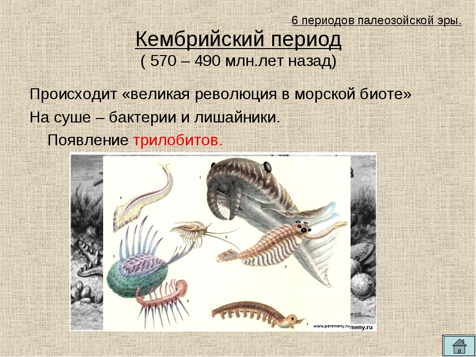 Кембрийский период ( 570 – 490 млн.лет назад) Происходит «великая революция в...