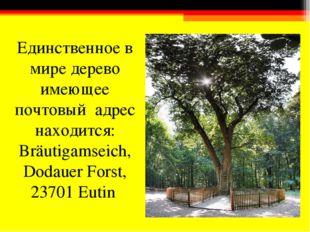 Единственное в мире дерево имеющее почтовый адрес находится: Bräutigamseich,