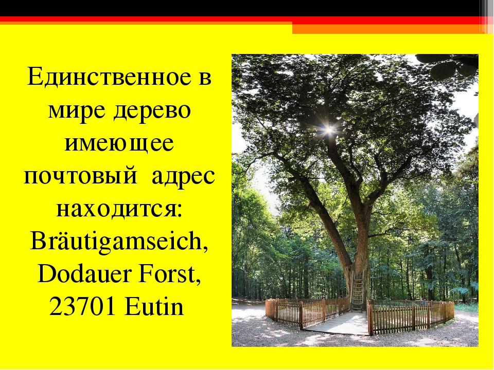 Единственное в мире дерево имеющее почтовый адрес находится: Bräutigamseich,...