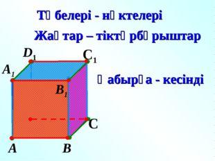 А В С D1 С1 Төбелері - нүктелері Жақтар – тіктөрбұрыштар Қабырға - кесінді А1