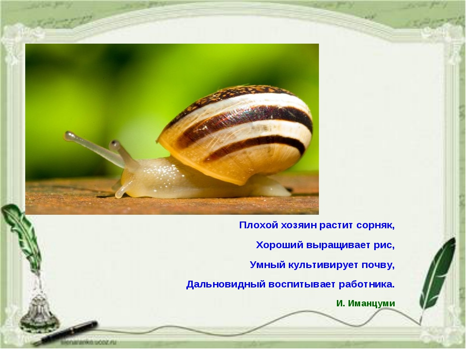 Плохой хозяин растит сорняк, Хороший выращивает рис, Умный культивирует почву...