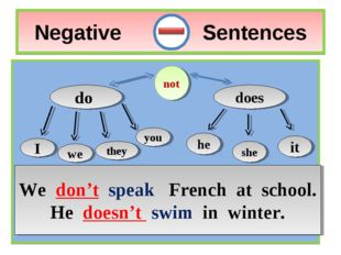 Negative Sentences do does I we you they not he it she We don't speak French