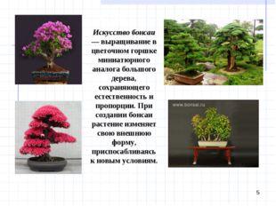 * Искусство бонсаи — выращивание в цветочном горшке миниатюрного аналога боль