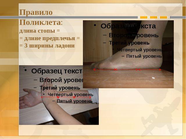Правило Поликлета: длина стопы = = длине предплечья = = 3 ширины ладони