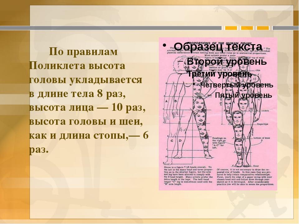 По правилам Поликлета высота головы укладывается в длине тела 8 раз, высота...