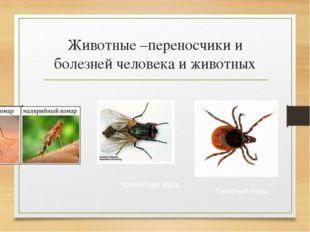 Животные –переносчики и болезней человека и животных Комнатная муха Таежный к