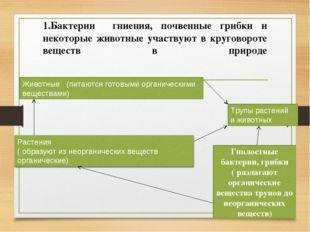1.Бактерии гниения, почвенные грибки и некоторые животные участвуют в кругово