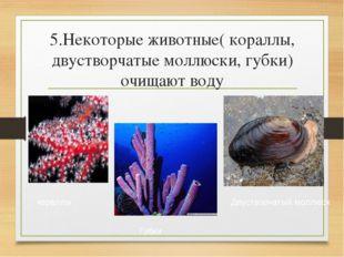 5.Некоторые животные( кораллы, двустворчатые моллюски, губки) очищают воду ко