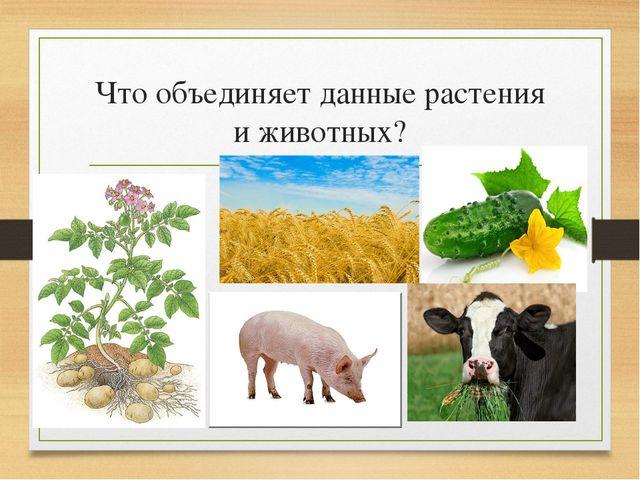 Что объединяет данные растения и животных?