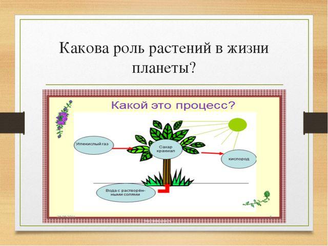 Какова роль растений в жизни планеты?