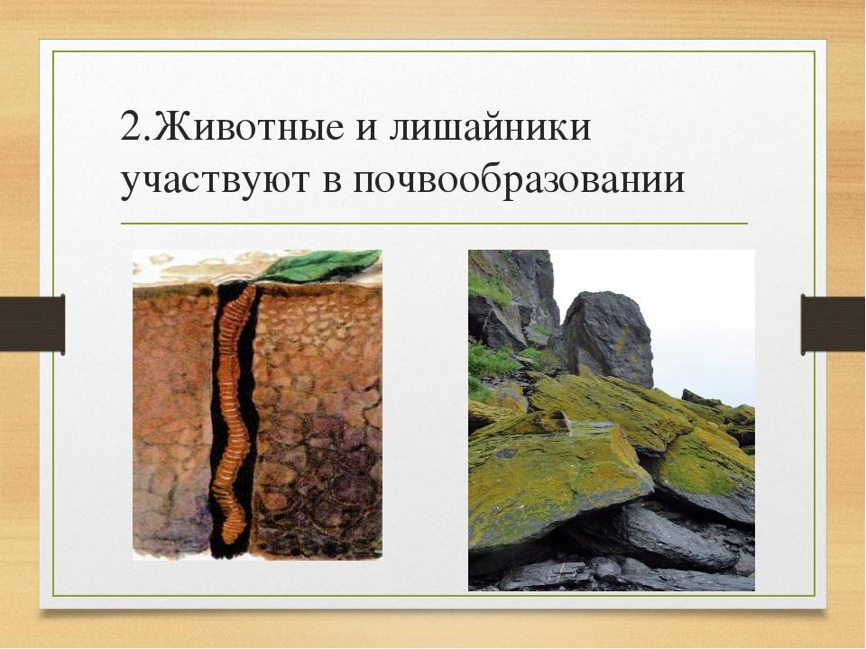 2.Животные и лишайники участвуют в почвообразовании