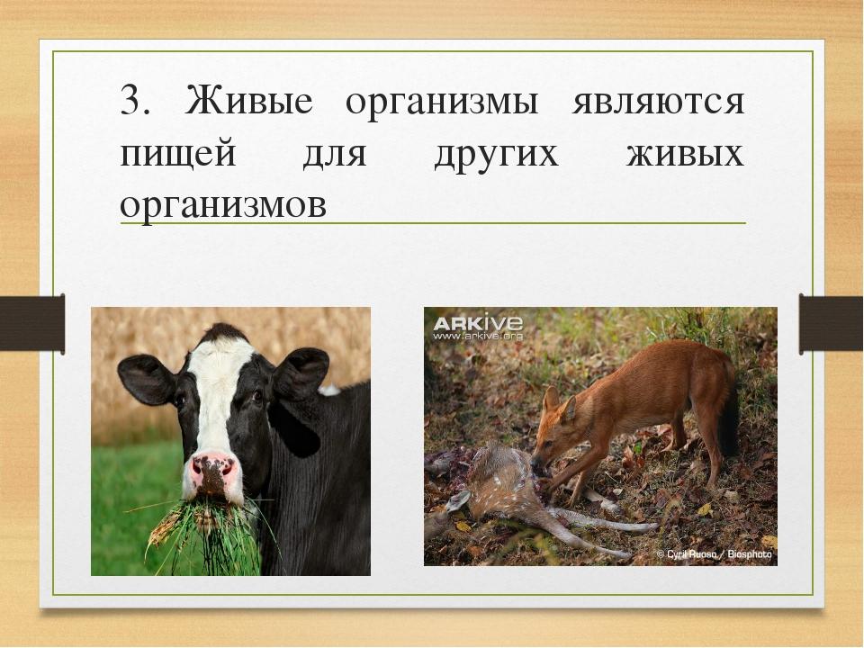 3. Живые организмы являются пищей для других живых организмов