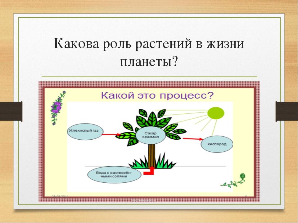 какие организмы являются паразитами росянка