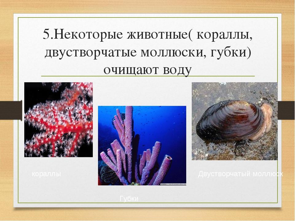 5.Некоторые животные( кораллы, двустворчатые моллюски, губки) очищают воду ко...