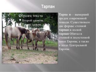 Тарпан Тарпа́н— вымерший предок современной лошади. Существовало две формы: с